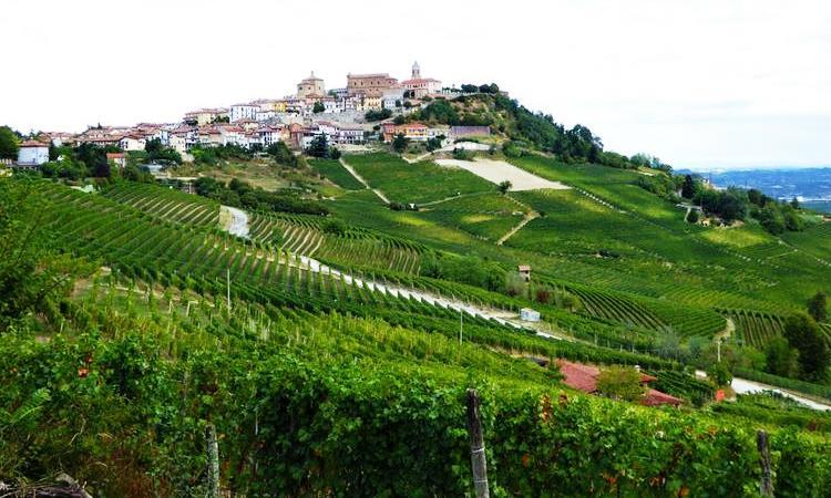 Piedmont countryside; VBT slow food bike tour; piedmont
