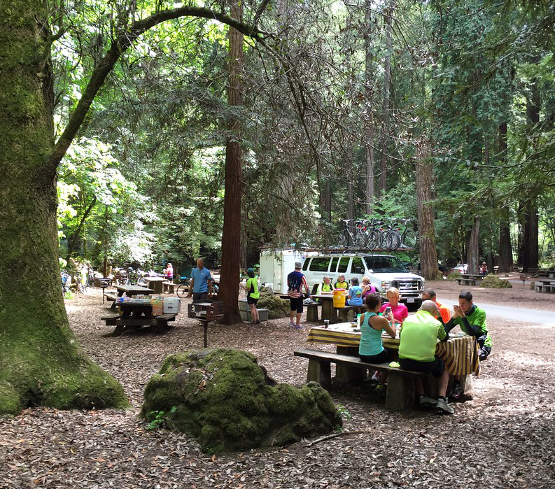 Picnic with the redwoods