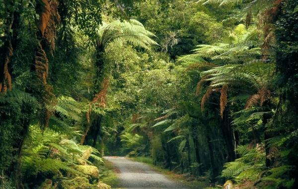The South Island