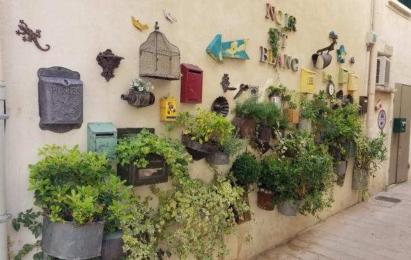 Provence: The Alpilles