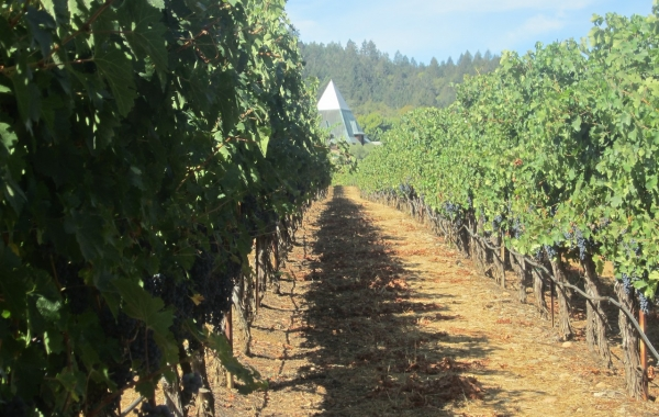 California Wine Country & the Coast