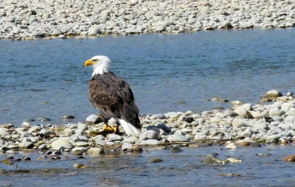 Yellowstone & Grand Teton: Walking America's First National Park